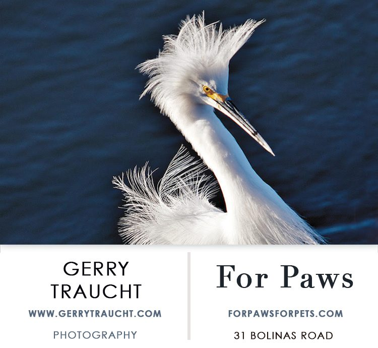 Showing at For Paws, Gerry Traucht